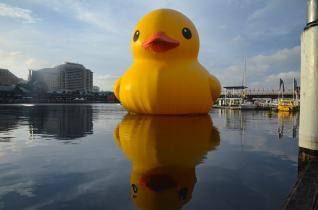 The Giant Duck, Sydney Harbour, Australia