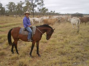 Cattle Mustering Australia