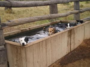 Swim in the trough