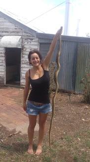 Black Headed Python, Australia