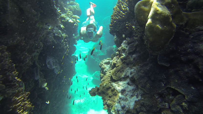 Diving the Great BarrierReef