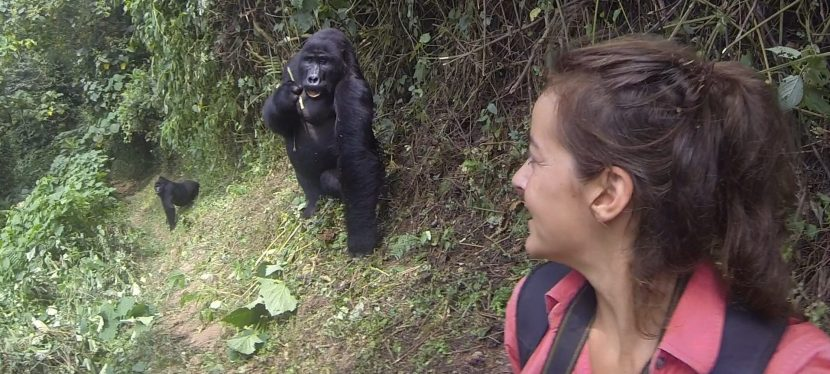 The Bwindi Impenetrable Forest: An Encounter withGorillas
