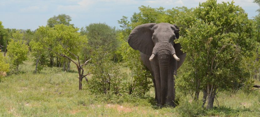 Botswana: Chobe on Wheels