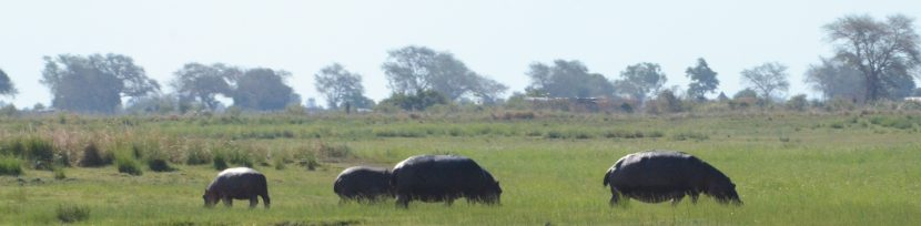 Botswana: Chobe on Water